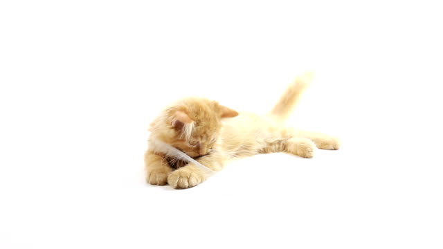 Cat playing with usb cable video