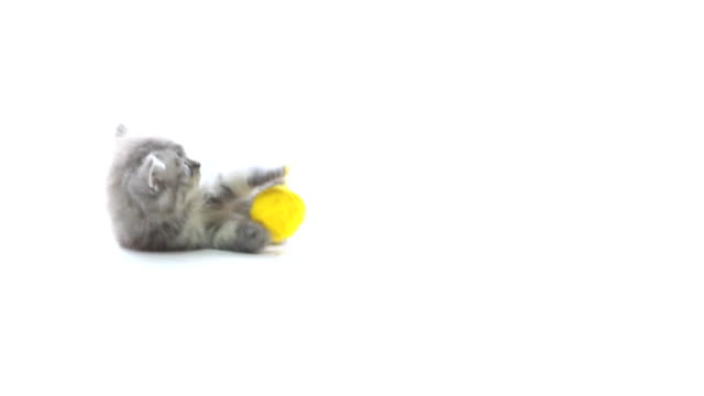 Cat playing wool video