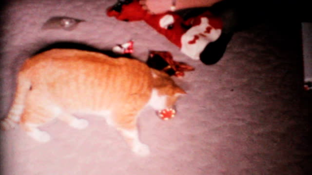 Cat Plays With Christmas Ornament-1967 Vintage 8mm film A funny calico cat plays with her Christmas ornament under the Christmas tree in 1967. See more Vintage 8mm home movie film clips… tortoise shell stock videos & royalty-free footage