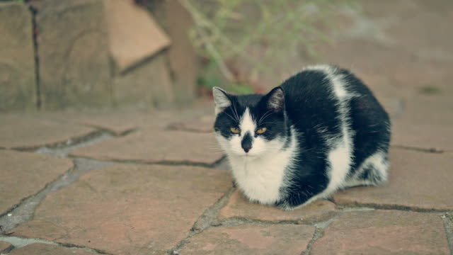 Cat resting in the garden. Sitting on a pavement video
