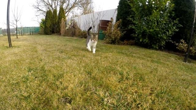 Cat running slow motion video