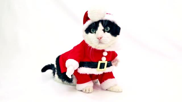 Cat Santa Christmas video