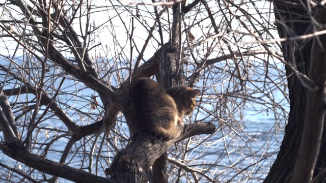 gato senta-se em uma árvore contra o fundo do mar - vídeo