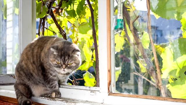 gatto posa sul balcone con vista sulla strada. - davanzale video stock e b–roll