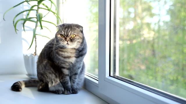 gatto si trova sulla davanzale mattina. - davanzale video stock e b–roll