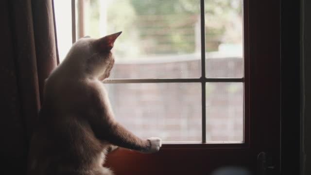 vídeos de stock, filmes e b-roll de gato senta-se no peitoril da janela e olha pela janela. - janela