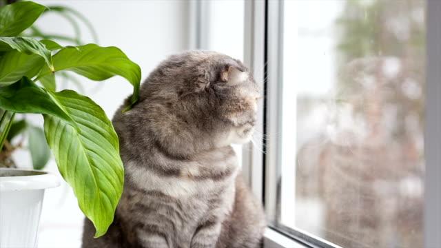 gatto si trova su windowsill e look fuori dalla finestra. - davanzale video stock e b–roll