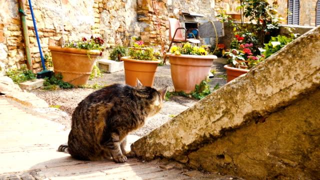 saksı küçük i̇talyan kasabasında bir sokakta oturan kedi - bahçe ekipmanları stok videoları ve detay görüntü çekimi