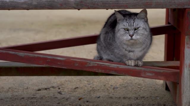 cat sitting under the bench - hiroshima filmów i materiałów b-roll