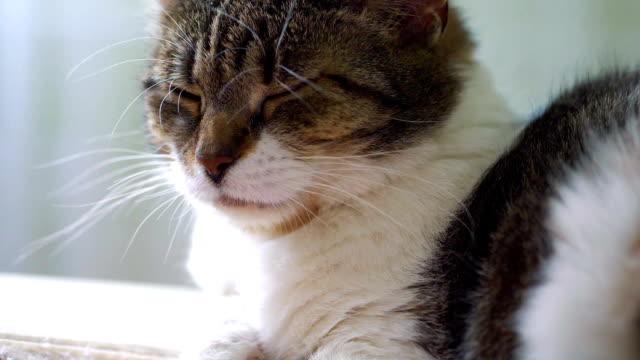 スローモーション 180 fps でソファの上で眠っている猫 - ふわふわ点の映像素材/bロール