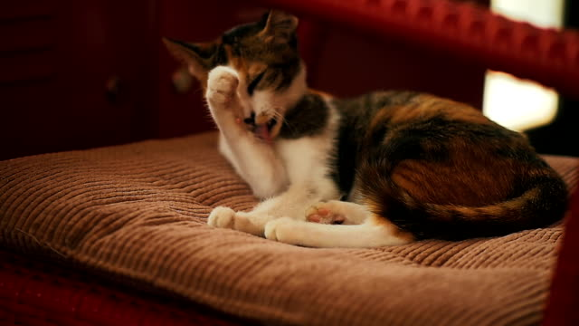 cat, slow motion - baffo parte del corpo animale video stock e b–roll