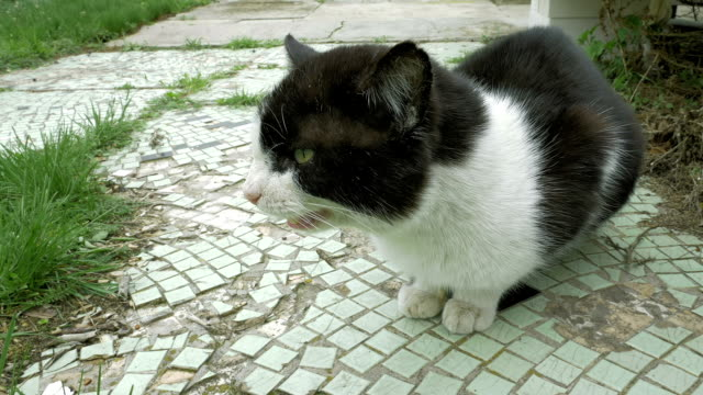 Cat spits whines meows and hisses outdoors video
