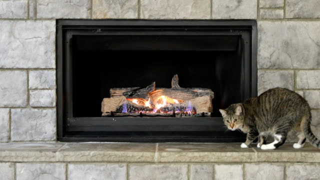 Cat staying warm near glowing fireplace Family cat staying warm by playing near fireplace fireplace stock videos & royalty-free footage