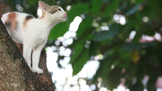 gatto bloccato nella struttura ad albero, pet salvataggio - felino video stock e b–roll