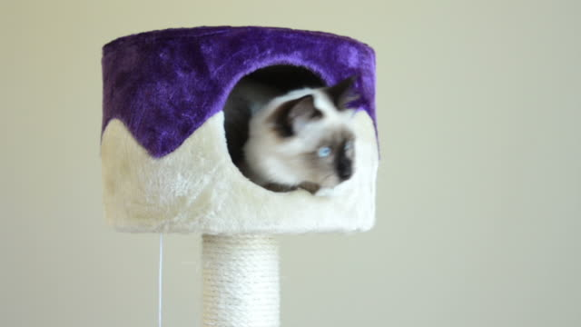 Cat Tree video