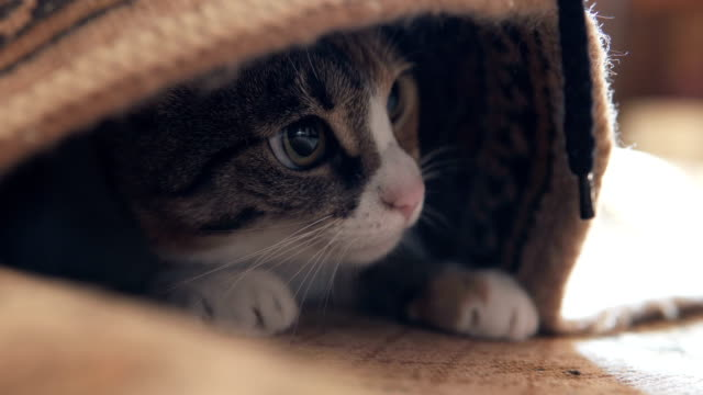 Cat under the carpet is played - vídeo