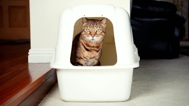 vídeos de stock e filmes b-roll de 4k cat using litter box - cheiro desagradável