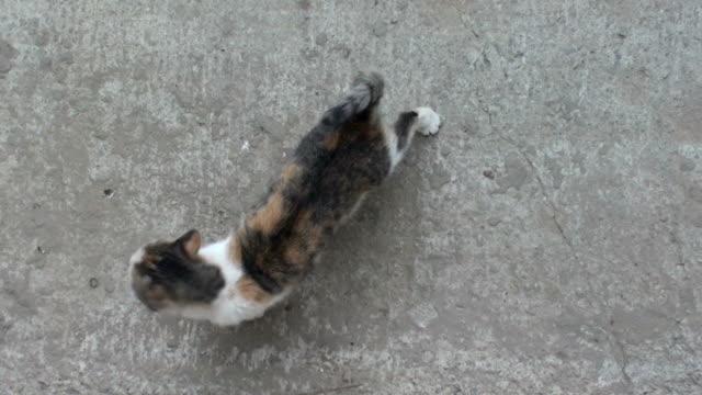 cat - 動物の行動点の映像素材/bロール