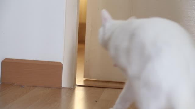 katt - morrhår bildbanksvideor och videomaterial från bakom kulisserna