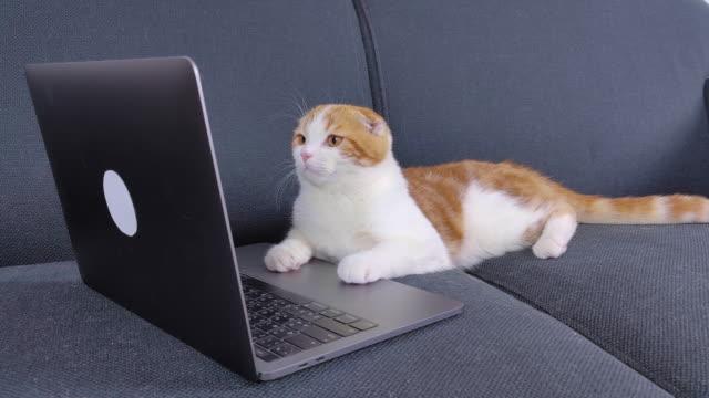 vídeos de stock, filmes e b-roll de gato - felino