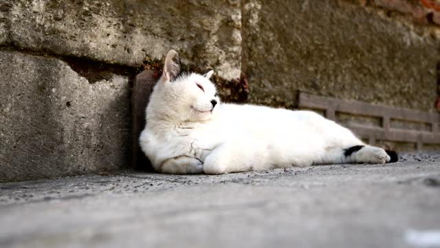 кошка - кошка смешанной породы стоковые видео и кадры b-roll