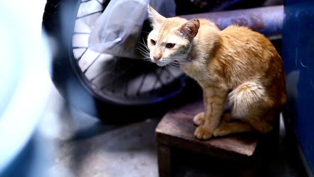 Cat Cat in factory shorthair cat stock videos & royalty-free footage