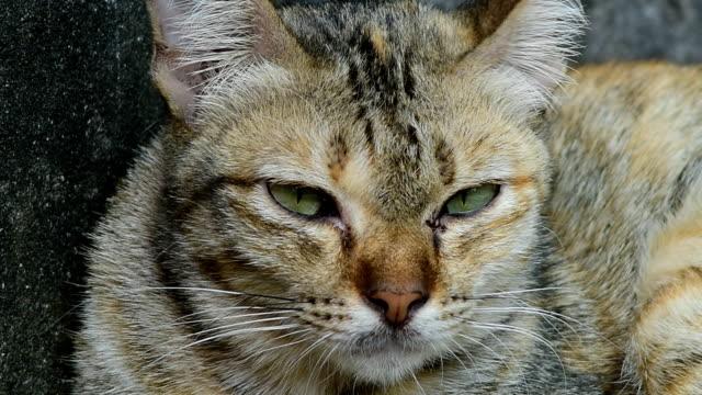 cat - кошка смешанной породы стоковые видео и кадры b-roll