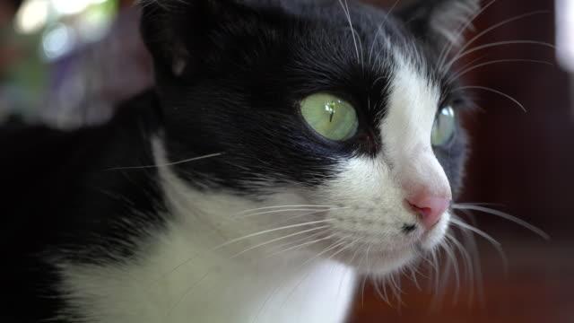 cat - ふわふわ点の映像素材/bロール