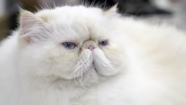 Cat video