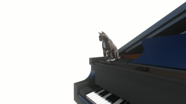 Cat washes sitting on the piano on white