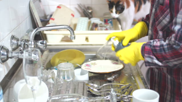 Cat watching dish washing. Man washing dishes in the kitchen and a cat watching on him. dishwashing liquid stock videos & royalty-free footage