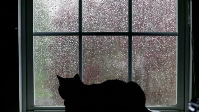 猫の窓から雨を見て - 雨点の映像素材/bロール