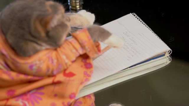 cat writing in journal diary