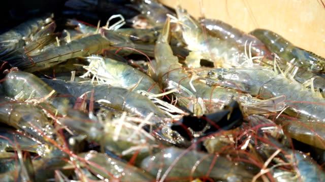 Catching shrimp