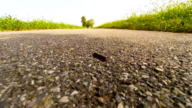 Caterpillar on the road video