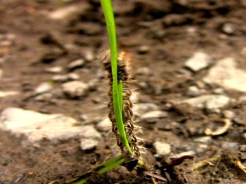pal: caterpillar - 10 saniyeden daha kısa stok videoları ve detay görüntü çekimi