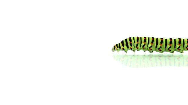 stockvideo's en b-roll-footage met caterpillar walking - rups
