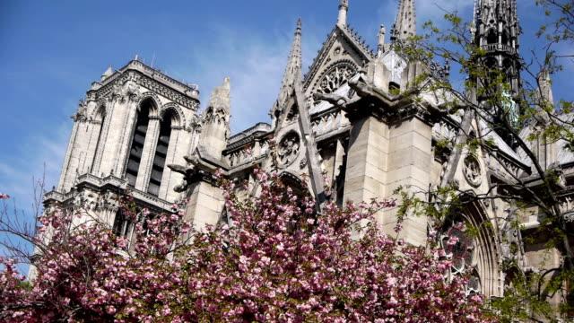 cattedrale di notre-dame e alberi in fiore.   parigi, francia - gargoyle video stock e b–roll