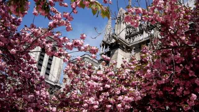 cattedrale di notre-dame durante la primavera.   parigi, francia - gargoyle video stock e b–roll
