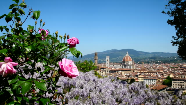 Cathedral of Santa Maria del Fiore in Florence seen from a garden near Piazzale Michelangelo with blooming purple wisteria and pink roses on foreground. Florence, Italy.