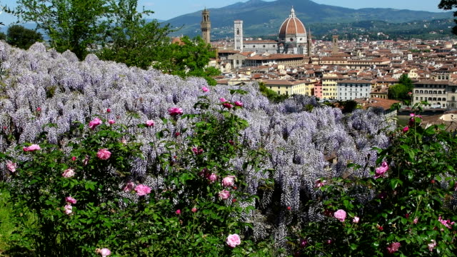Cathedral of Santa Maria del Fiore in Florence seen from a garden near Piazzale Michelangelo with beautiful blooming purple wisteria. Florence, Italy.