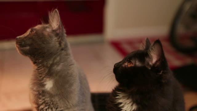Cats B Roll 4 video
