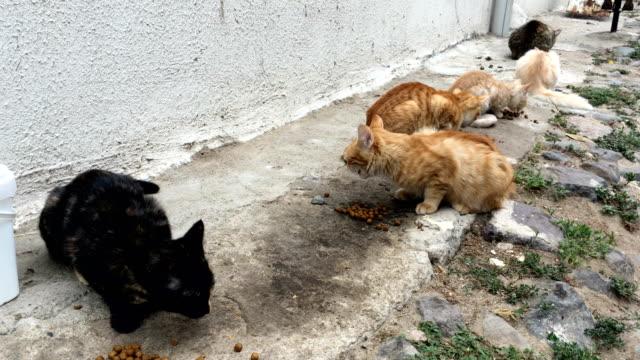 vídeos de stock e filmes b-roll de cats eating cat's food in the street - boca suja