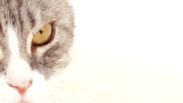 Cats eyes video
