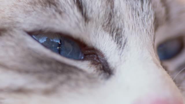 кошачий глаз - кошка смешанной породы стоковые видео и кадры b-roll