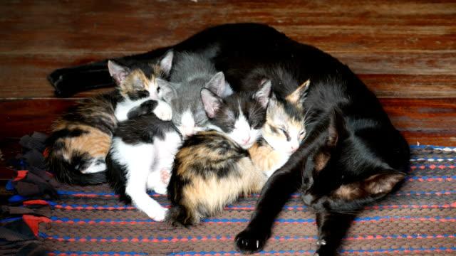 Cat's family is sleeping video