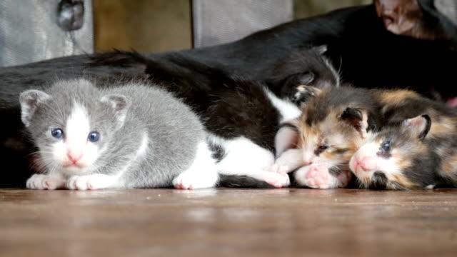 Cat's family video