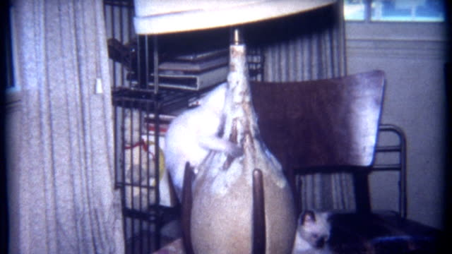 Cats Living Room 1960's video