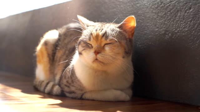 katter älskar att sola nära fönster i morgon kall dag - katt inomhus bildbanksvideor och videomaterial från bakom kulisserna