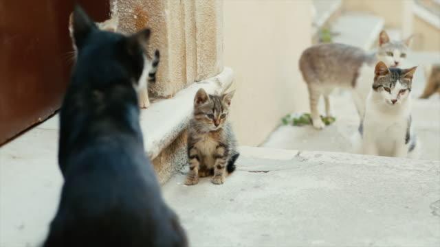 ローマの猫たち - ネコ科点の映像素材/bロール